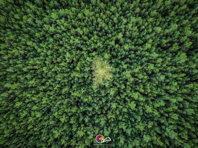 Paisagens/Natureza